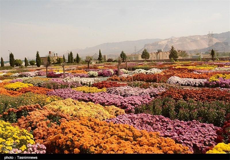 افتتاح نمایشگاه گل برازجان