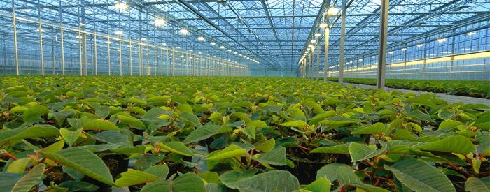 عدم وجود استاندارد برای گلخانه ها در ایران