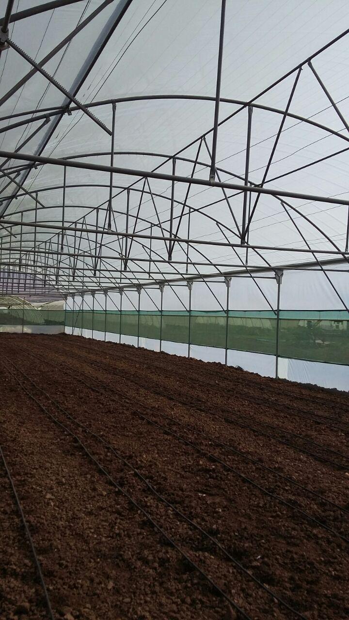 پروژه ساخت گلخانه سلیمانیه